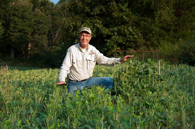Eagle Seed beans food plot