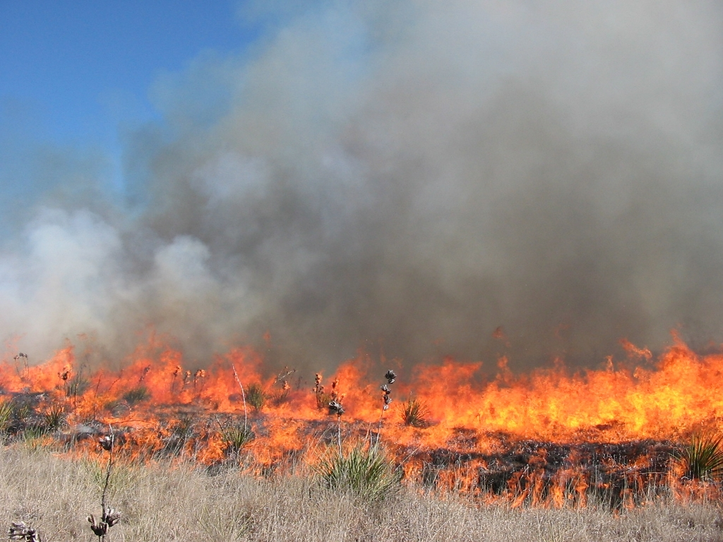 Photo of a Prescribed Fire in a Grass Field
