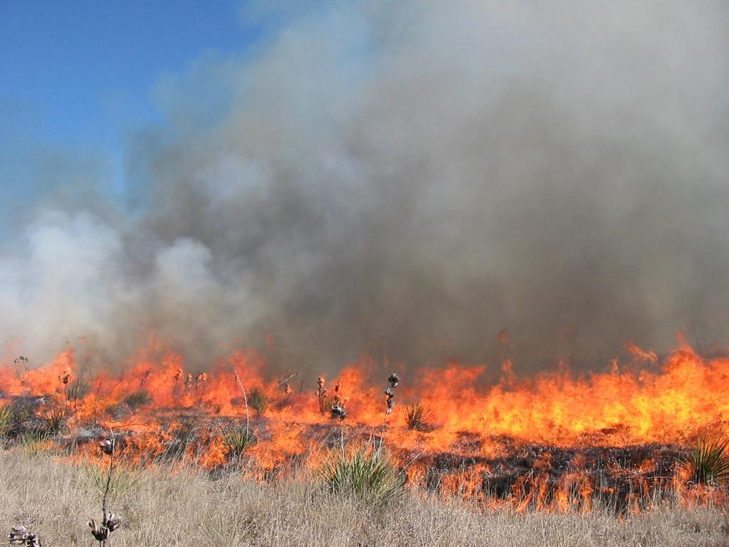 Photo of a Prescribed Fire in a Grass Field