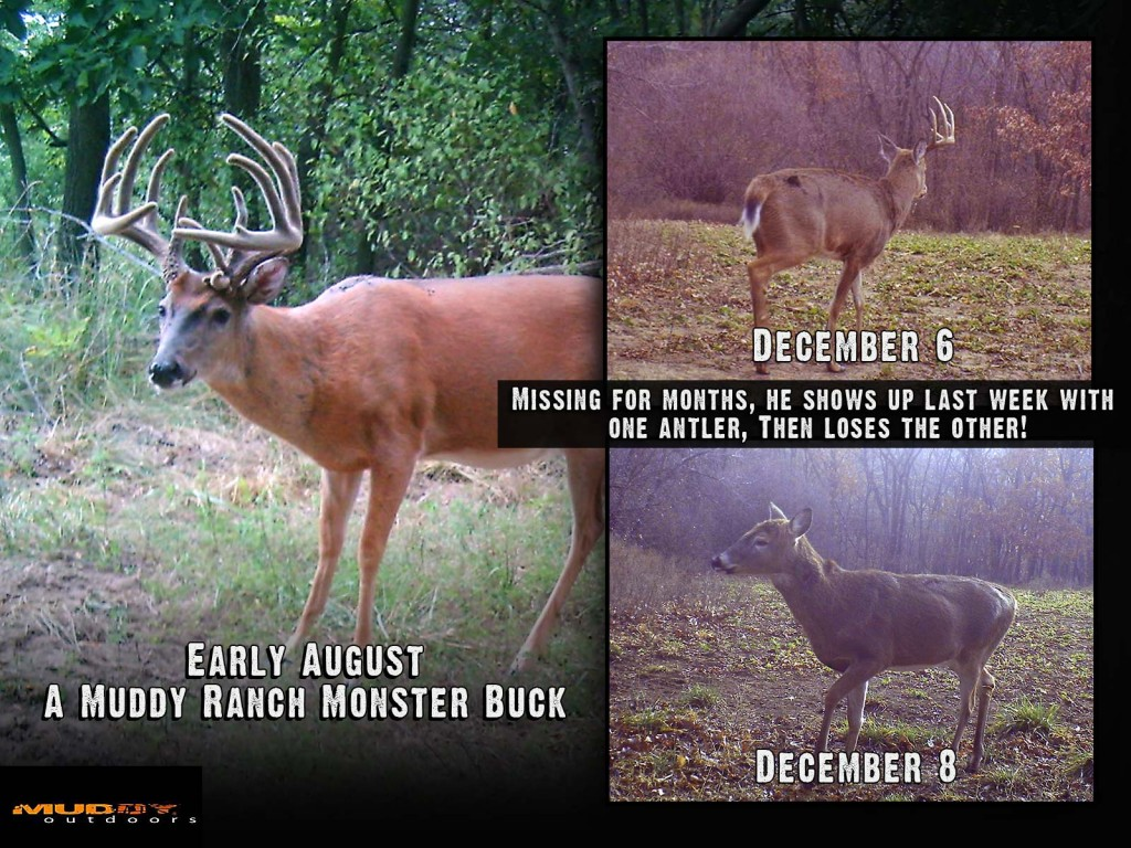 Before and After Photo Montage of Big Texas Buck That Shed His Antlers In December