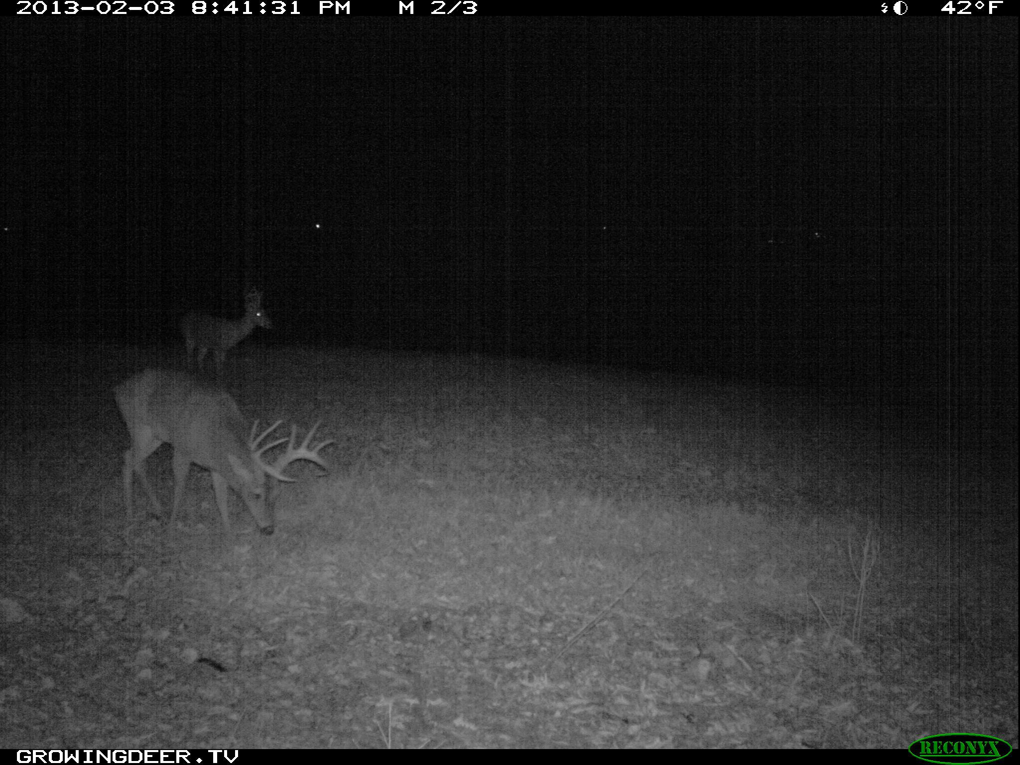 Trail Camera Photo of A Large  Antlered Whitetail  Buck We Call Split Brow