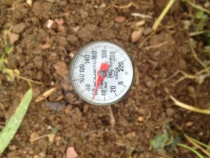 A Soil Thermometer Is Used to Measure Soil Temperture Prior to Planting Food Plots