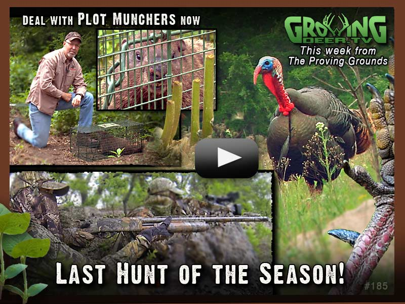 Watch growingdeer.tv episode 185 for the last turkey hunt of the season.