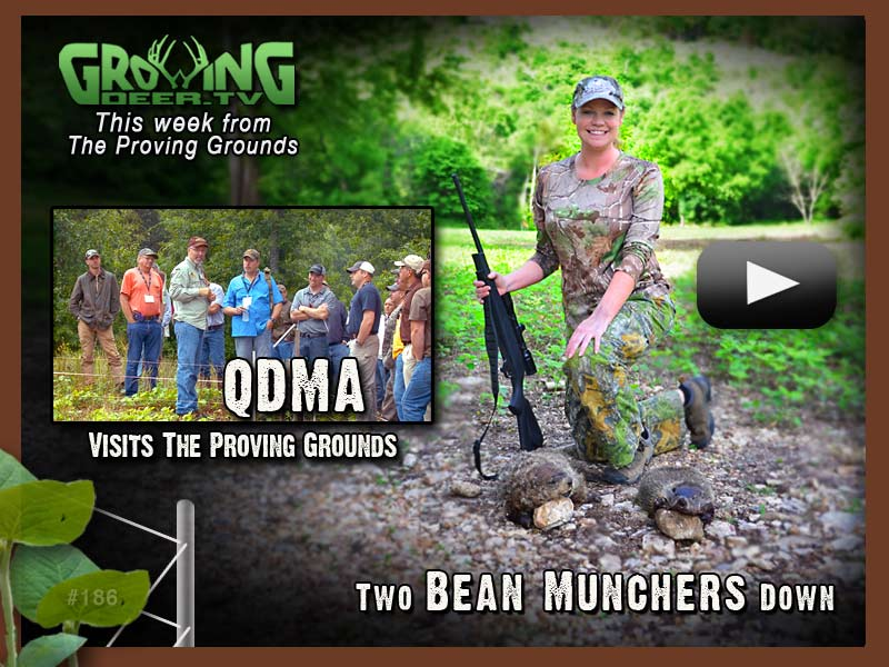 GrowingDeer.tv episode 186 has food plot tips and groundhog hunting action.