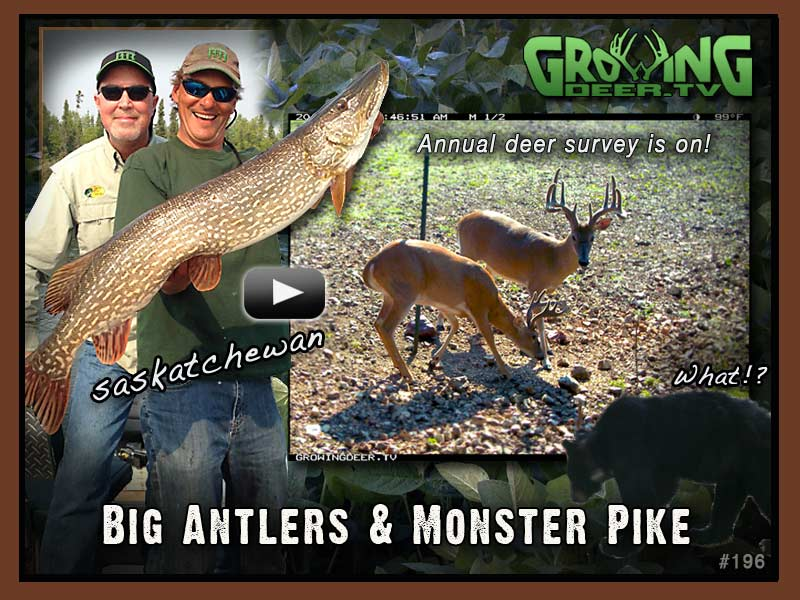image used for eblast giant norther pike and bucks at reconyx camera site