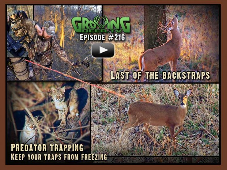 More great deer hunts and trapping tips in GrowingDeer.tv episode #216.