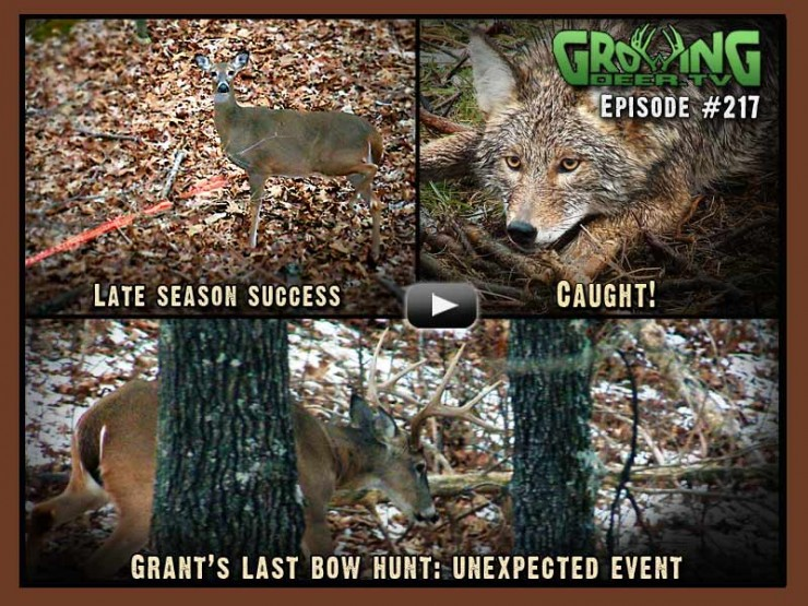 Watch GrowingDeer.tv episode #217 to see a late season bow hunt and predator trapping.