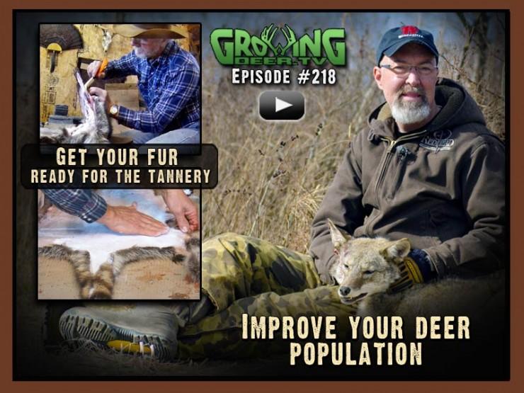 In GrowingDeer.tv episode #218 we show you how to process pelts.