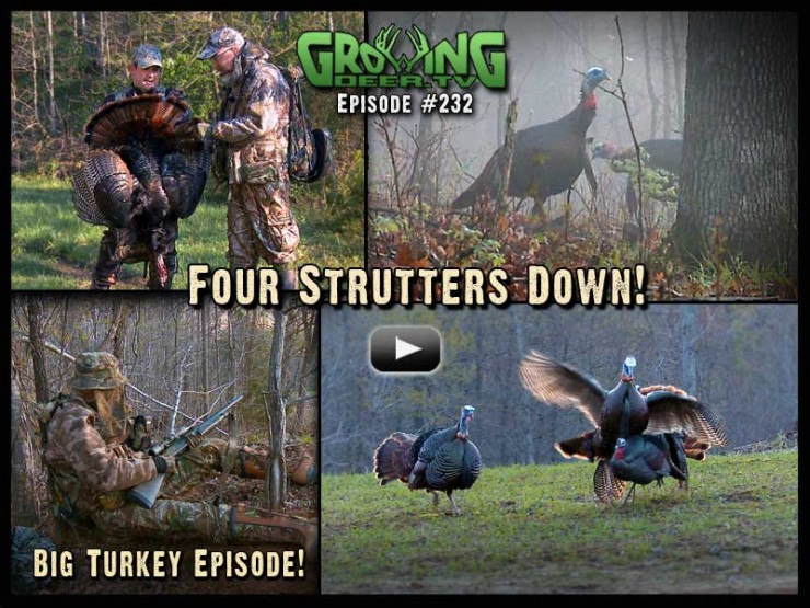 Episode 232 is another big turkey episode on GrowingDeer.tv!
