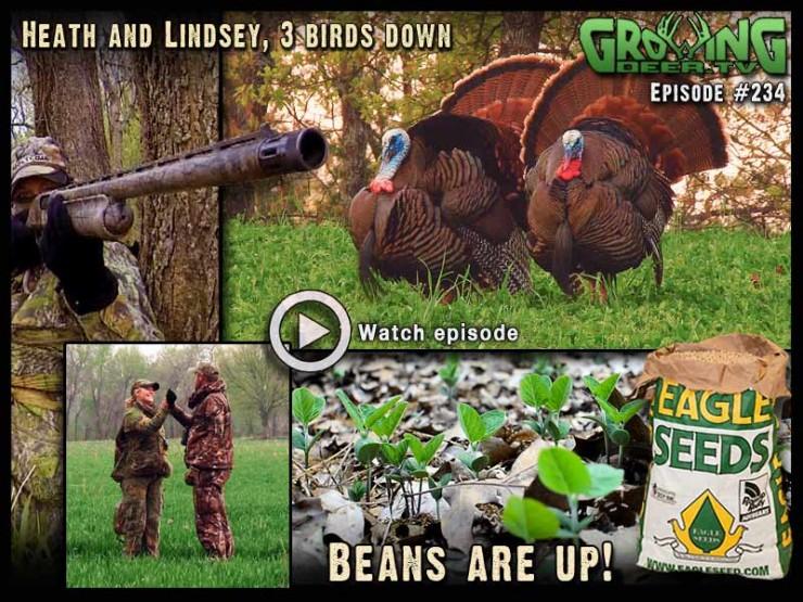 Three turkeys tagged in GrowingDeer.tv episode #234.