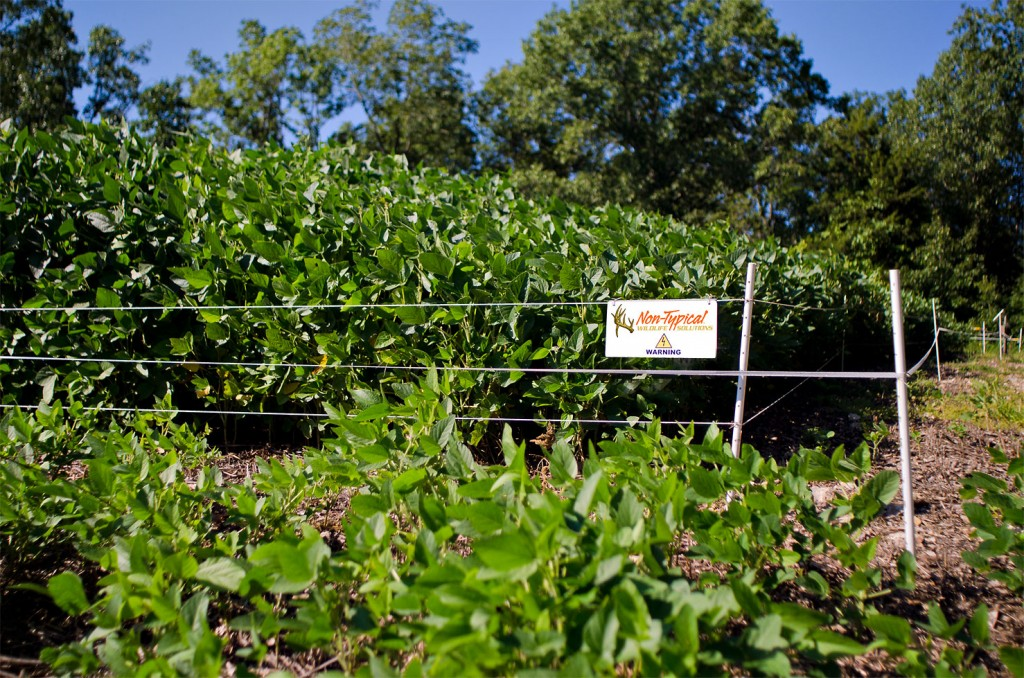 Eagle Seed beans in Hot Zone fence