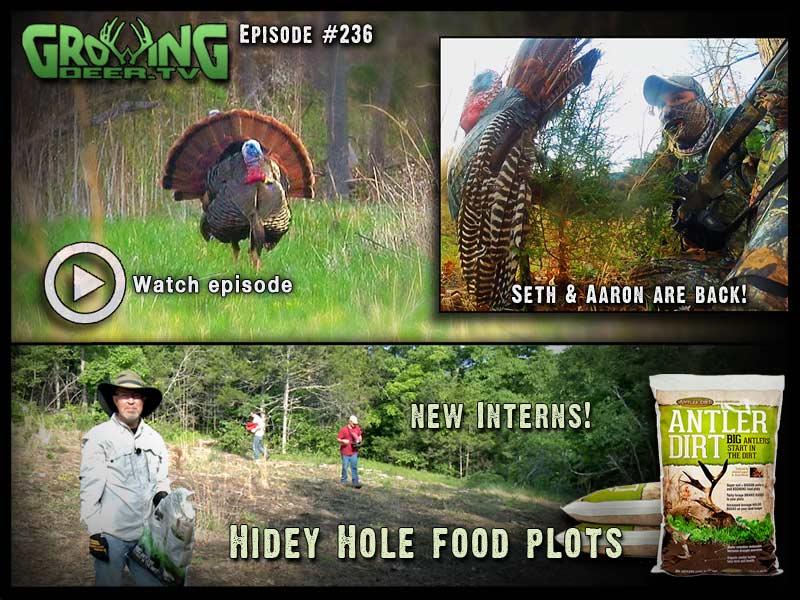 Hot strutters and killer food plots in GrowingDeer.tv episode #236.