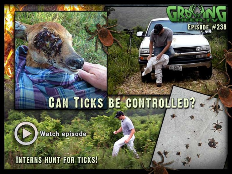 Learn how to control tick populations in GrowingDeer.com episode #238.