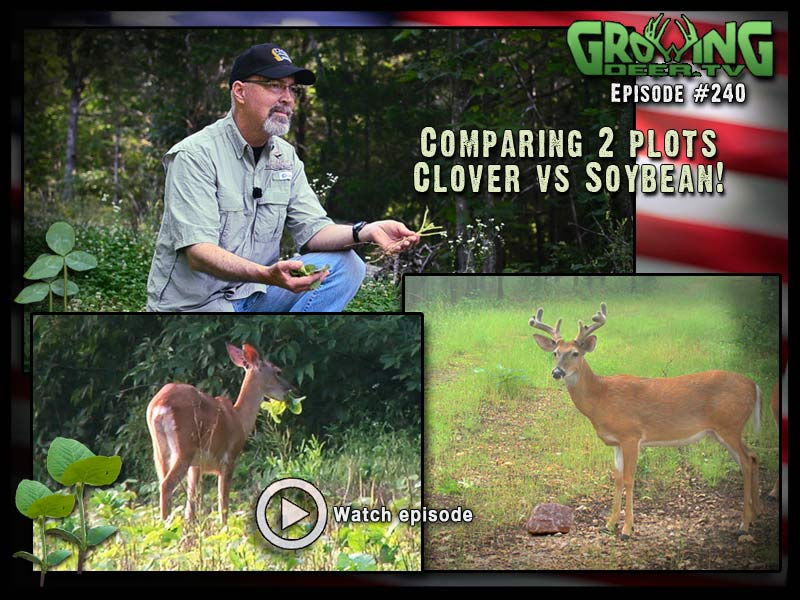 Learn what our best food plot crop is right now in GrowingDeer.tv episode #240.