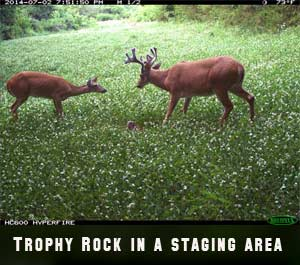 A buck at a Trophy Rock camera station.