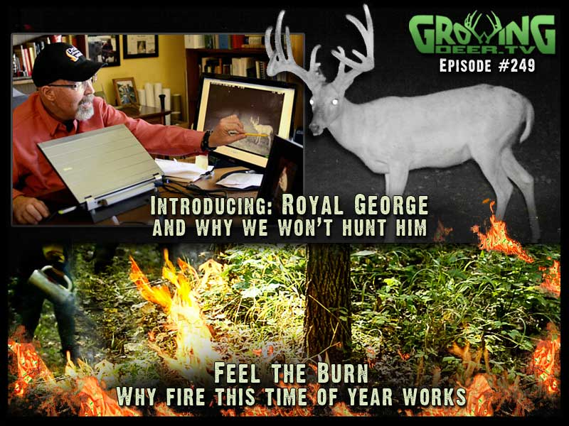 Introducing a hit list buck, Royal George, in GrowingDeer.tv episode #249.