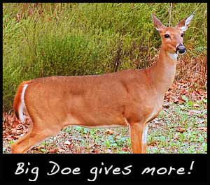 A mature doe.