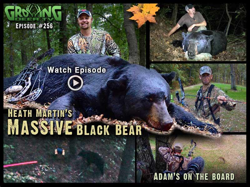 Heath Martin kills a massive black bear in GrowingDeer.tv episode #256.