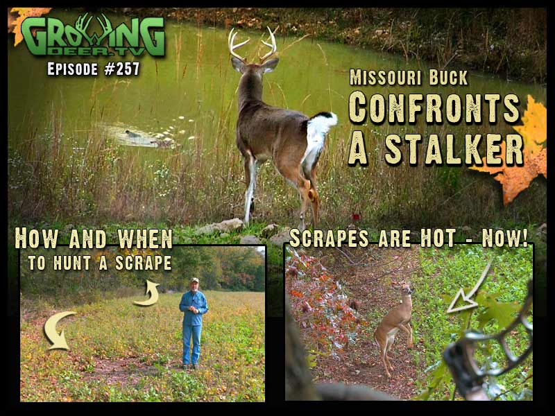 In GrowingDeer.tv episode 257 Grant takes the mystery out of hunting scrapes!