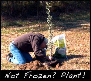 Grant plants a tree plot.