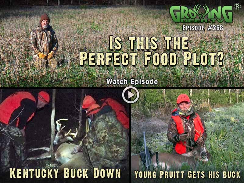 GrowingDeer.tv episode #268 – the perfect food plot.