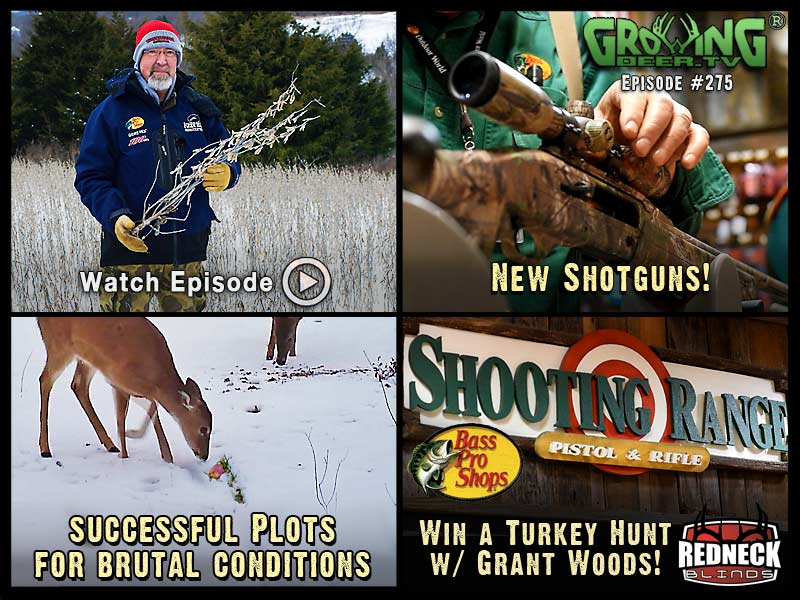 Watch GrowingDeer.tv episode #275 to learn which food plots deer need to survive brutal winters.
