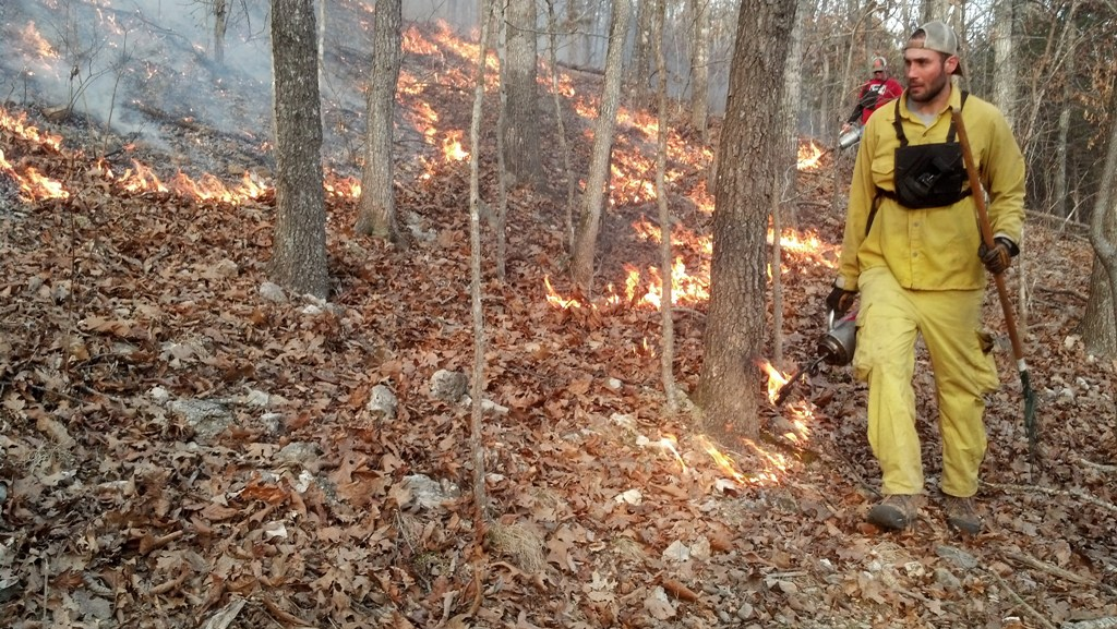 Using prescribed fire as a deer management tool