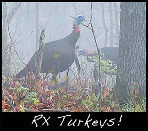 Burning is a known management tool for turkeys, especially in the early spring.