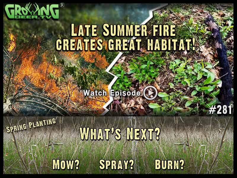 From late summer fire to great deer habitat in GrowingDeer.tv episode #281.
