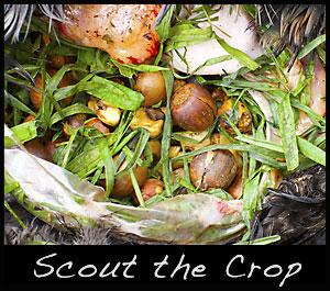 Inside the crop of a turkey