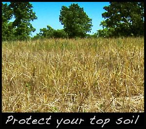 A sprayed wheat field.