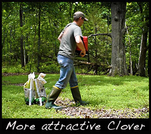 Fertilize clover for a better spring food plot