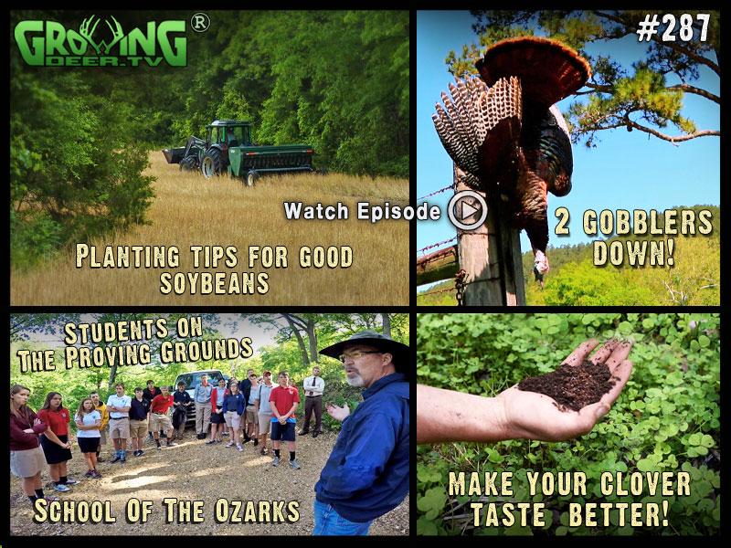 Spring food plot tips in GrowingDeer.tv episode #287.