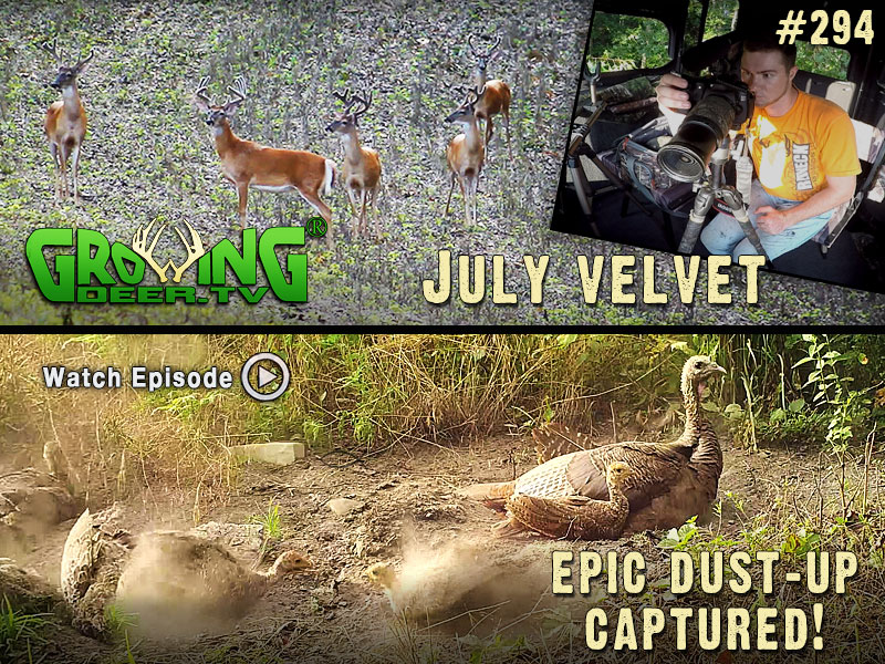 Velvet bucks and a turkey dust-up in GrowingDeer.tv episode #293.
