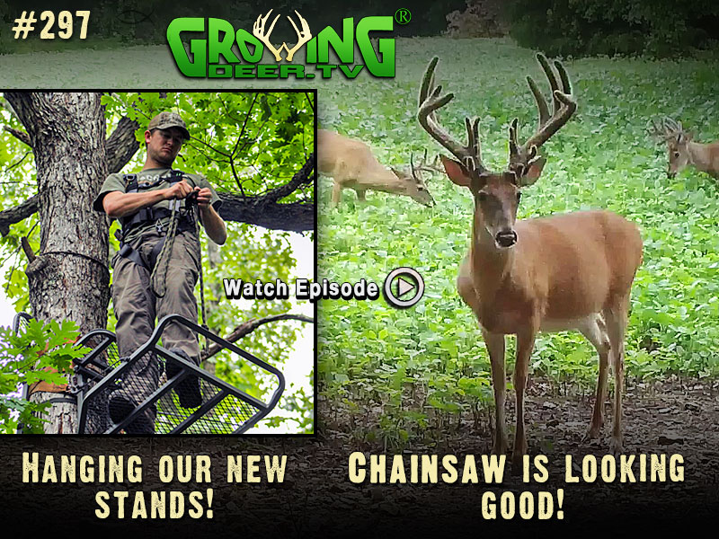 Watch to learn our early season strategy in GrowingDeer.tv episode #297.