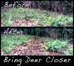 A before and after look at a path made next to one of the treestands.