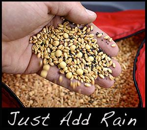 Fall food plot seeds