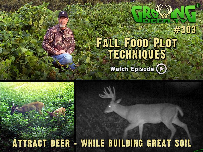 In GrowingDeer.tv episode #303 we show you food plot strategies that work.