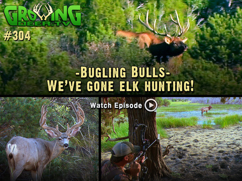 Watch GrowingDeer.tv episode #304 to see our elk hunt!