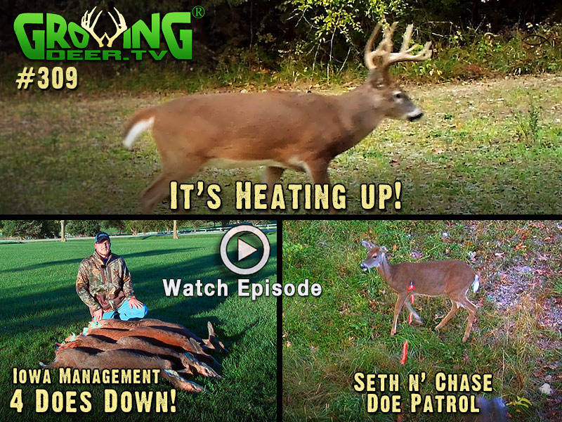 Doe management in action, watch GrowingDeer episode #309.