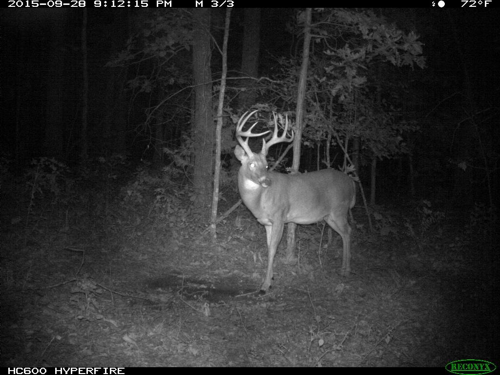 A mature 9 point buck