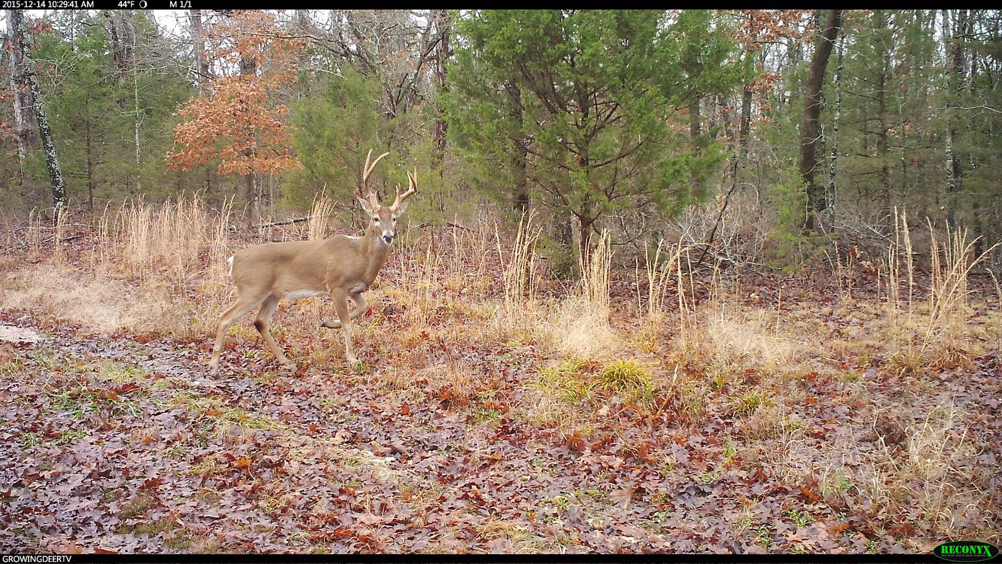We are watching and learning this buck's movements.