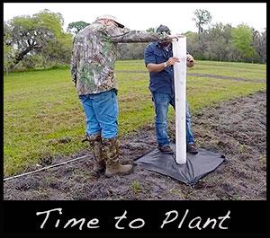 Planting a tree plot.