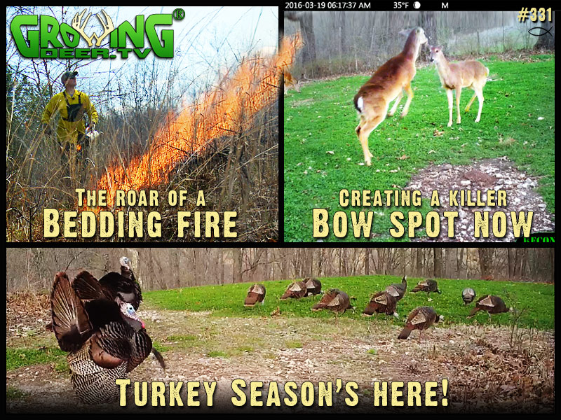 We share tips on how to improve your hunting land in GrowingDeer episode #331.