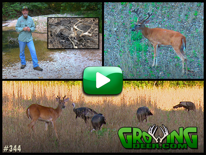 Watch as we scout for hit list bucks in GrowingDeer episode #344.