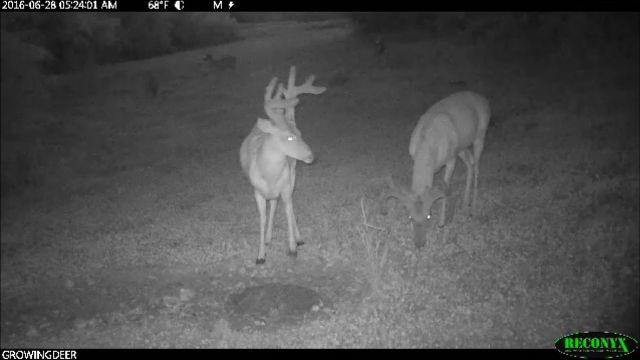Two hit list bucks