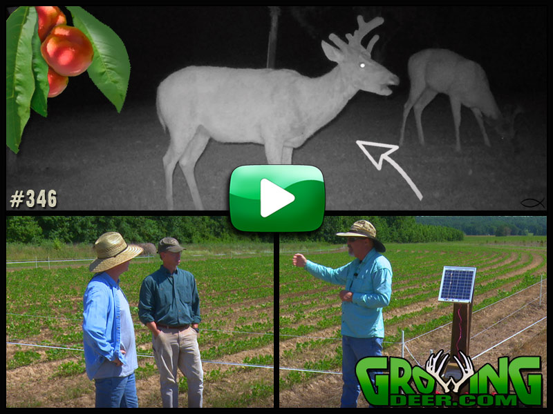 Learn about stand location placement in GrowingDeer episode 346.