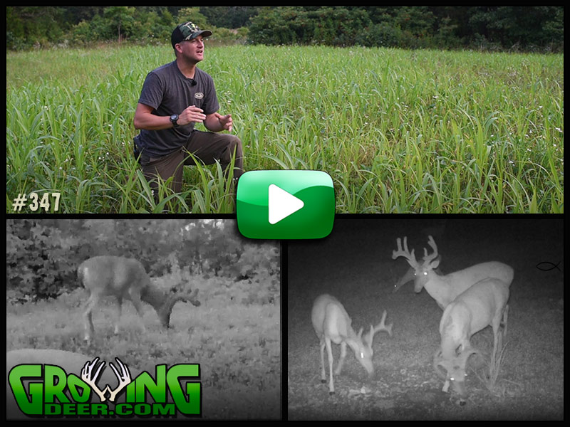 See a new technique for planting food plots in GrowingDeer episode 347.