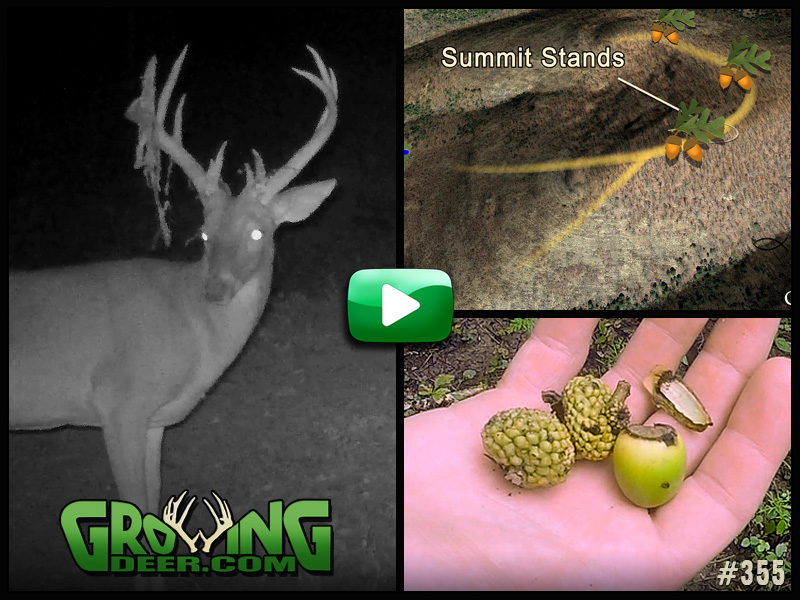 Watch GrowingDeer episode 355 to learn what methods of scouting we use!