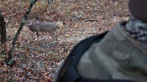 A buck re-visits a scrape
